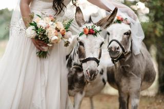 Wedding Testimonial from Miranda Kurucz